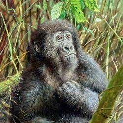 Young Mountain Gorilla, Rwanda by Tony Forrest -  sized 16x16 inches. Available from Whitewall Galleries